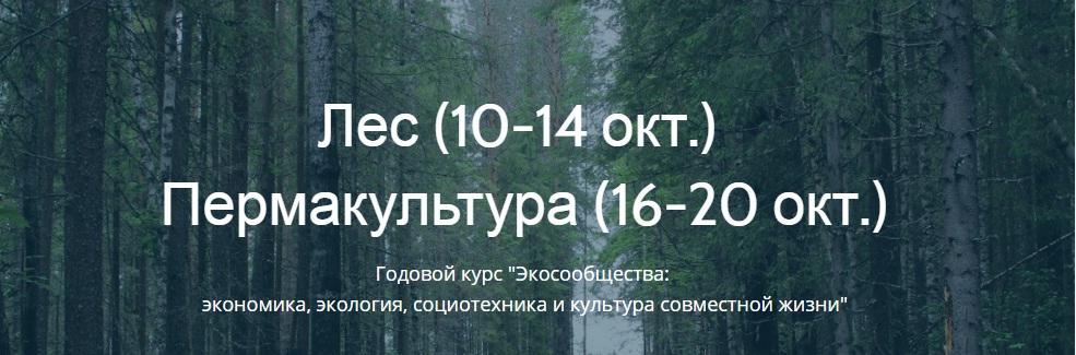 лес_пермакультура